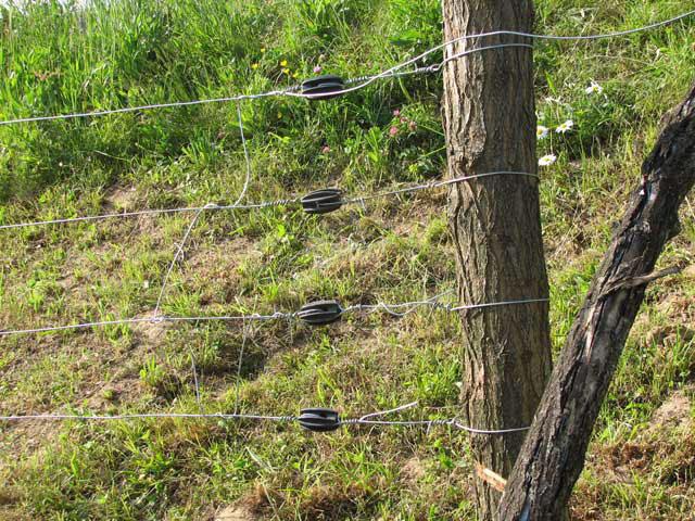 Povezane linije