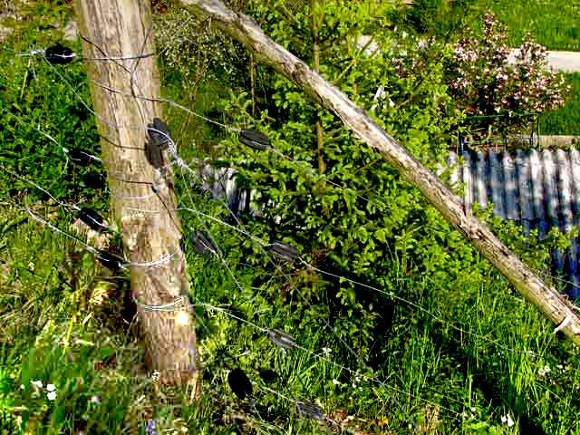 Vogal dveh ograj